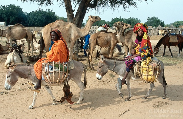 Sudan. West Darfur. Habilah. On sunday is market day. A group of nomads, belonging to the arab milicia called Janjaweed, come with their camels in the village to shop for food and trade or buy animals. Two women, wearing colorful veils on the heads, ride donkeys loaded with goods and a cock. © 2004 Didier Ruef